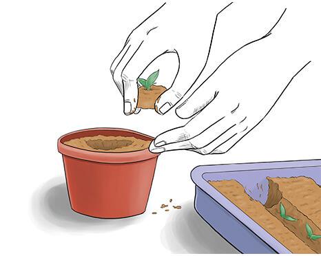 Transplant to Pots