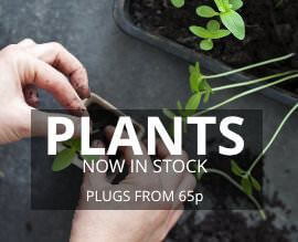 Plants Now in Stock